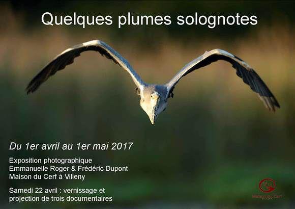 « Quelques plumes solognotes », une exposition photographique à la Maison du Cerf