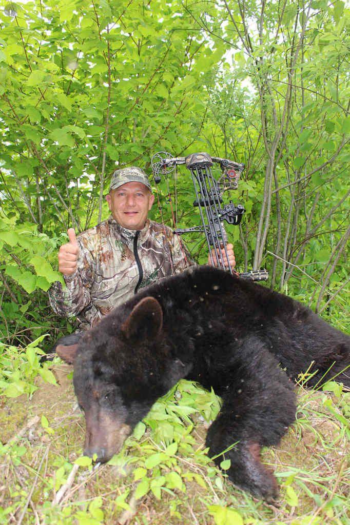 La quête de l'ours noir
