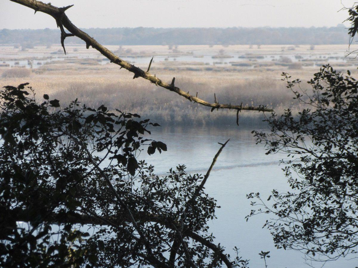 Lacanau :étang de Cousseau