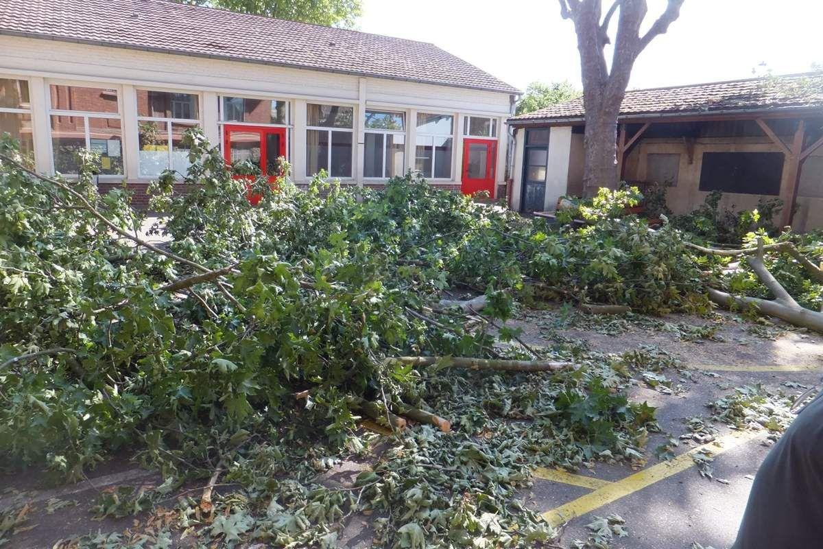 L'étrange affaire de l'abattage sauvage des platanes de l'école Nonneville à Aulnay-sous-Bois