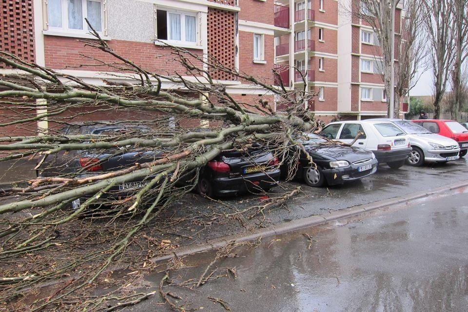 Un arbre tombe sur trois voitures dans le quartier Mitry-Ambourget à Aulnay-sous-Bois
