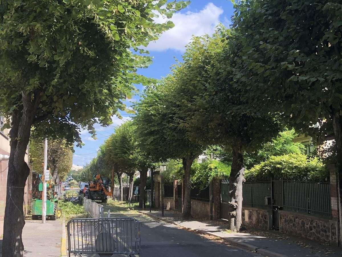 La taille des arbres en été à Aulnay-sous-Bois est justifiée