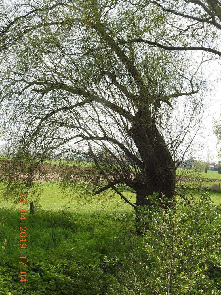 14-04-19- LE SPLENDIDE CANAL DE ROUBAIX, SAINT LEGER, SPIERE ...  DANS  SON EXPLOSION PRINTANIERE (YB)