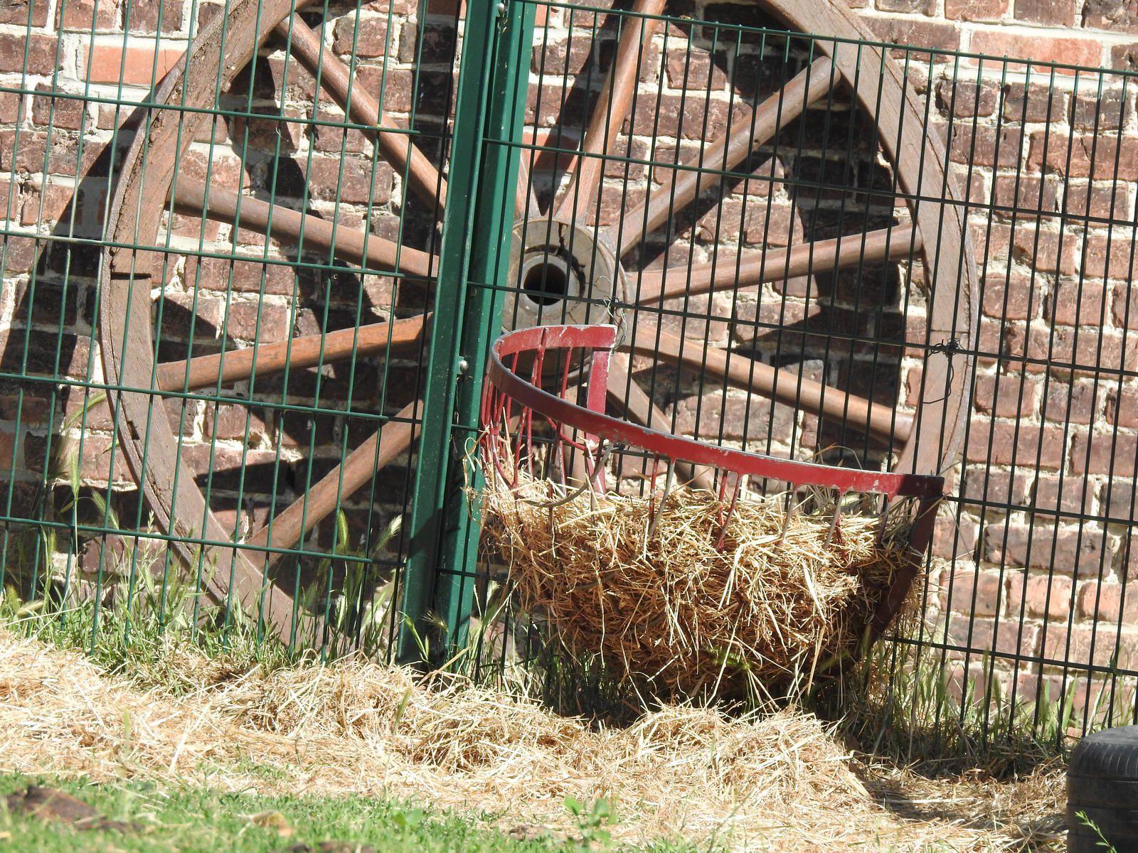 20-06-20- FLANERIES AU PARC DU LION A WATTRELOS - QUARTIER DE LA FERME