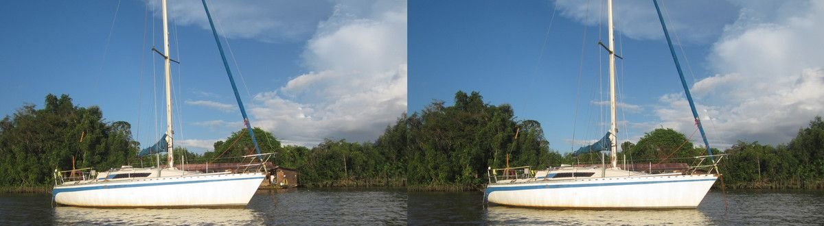 Forest Art Guyane en vision croisée
