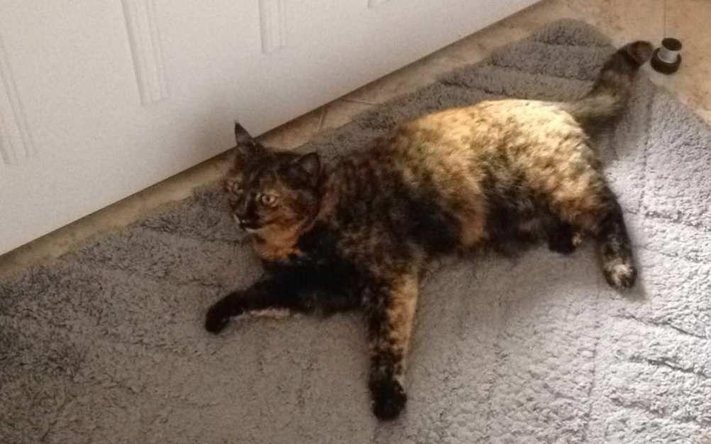 Chat perdu à Echenoz
