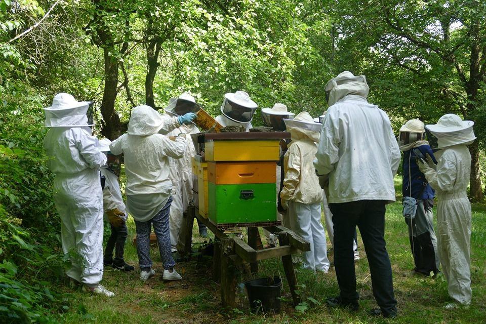Matinée autour de l'apiculture