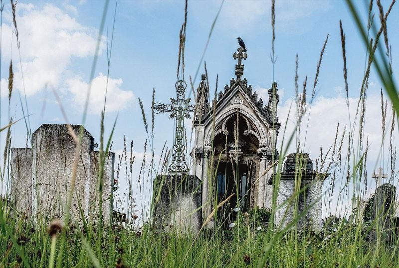 Trente et une espèces d'oiseaux peuvent être aperçues au cimetière de Loyasse. Bruno Amsellem/Divergence
