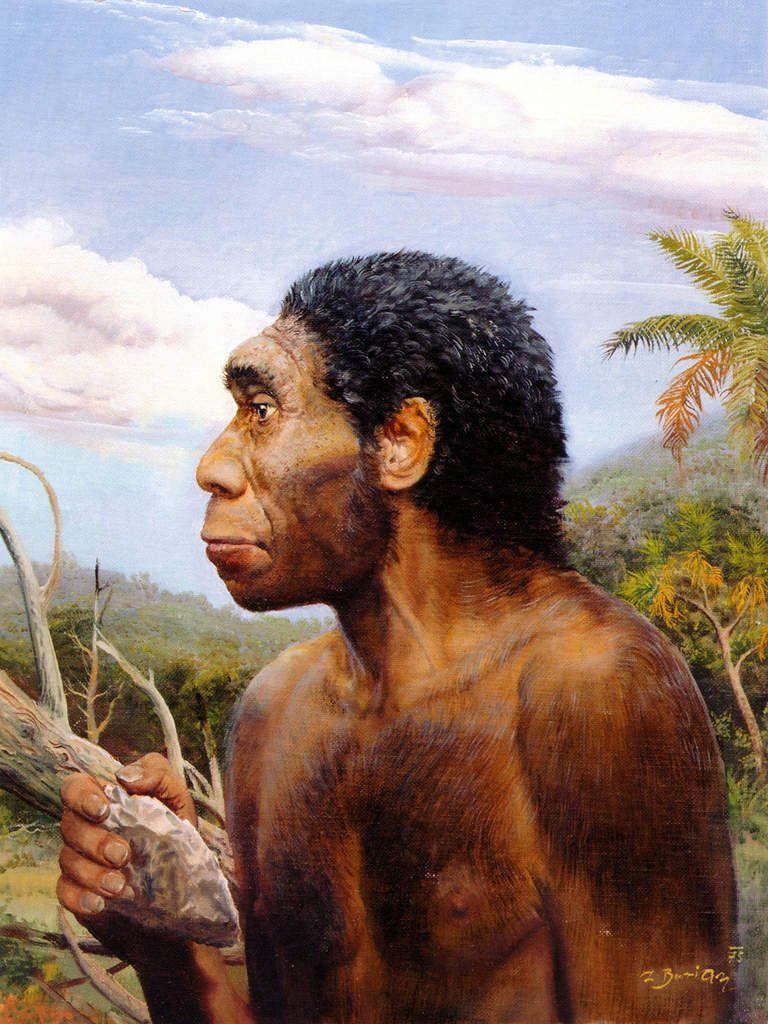 La paléoanthropologie  pour les nuls