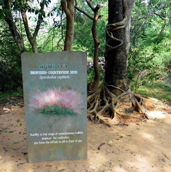 Chapitre 2294 : Humilité ( Auroville , 2)