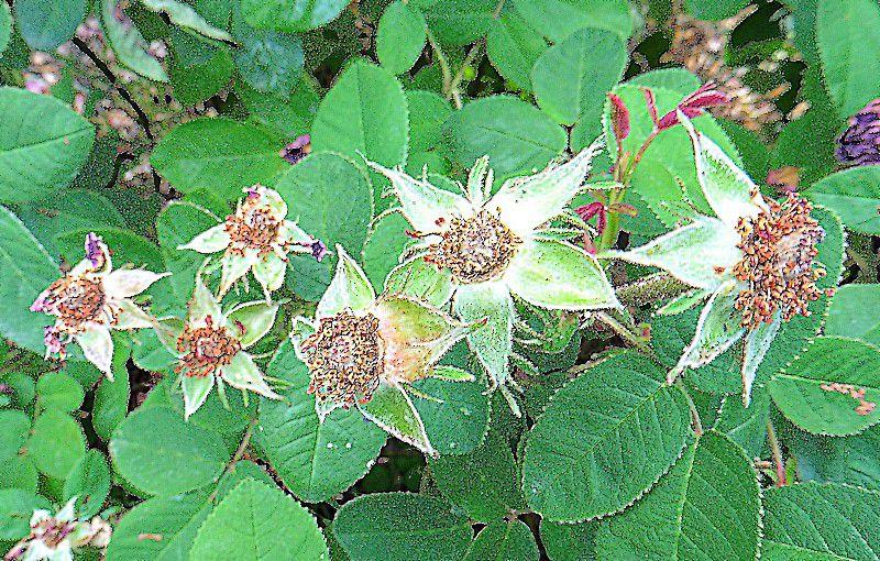 Chapitre 2651 : après la floraison