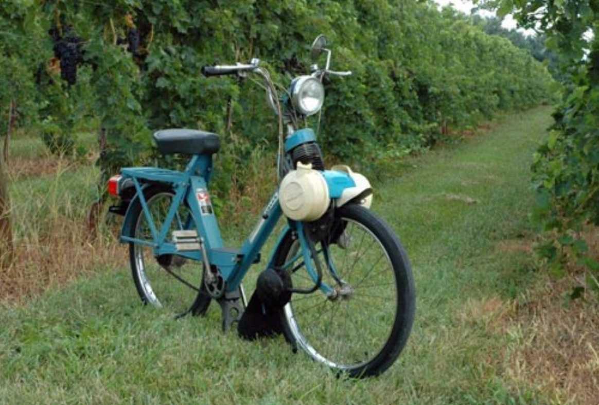Vélosolex prêt pour les vendanges…