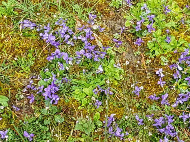 Un peu de nature en fleurs