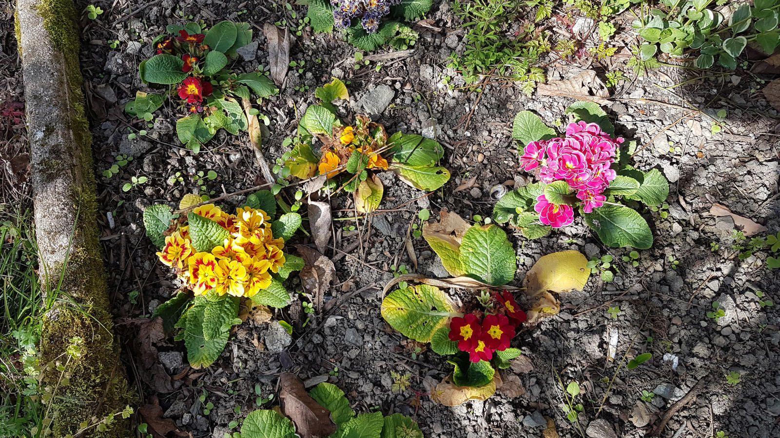 Quelques fleurs au soleil...