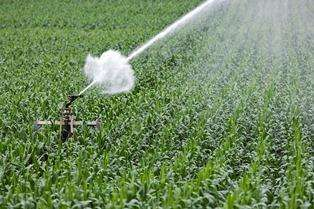arrosage et irrigation