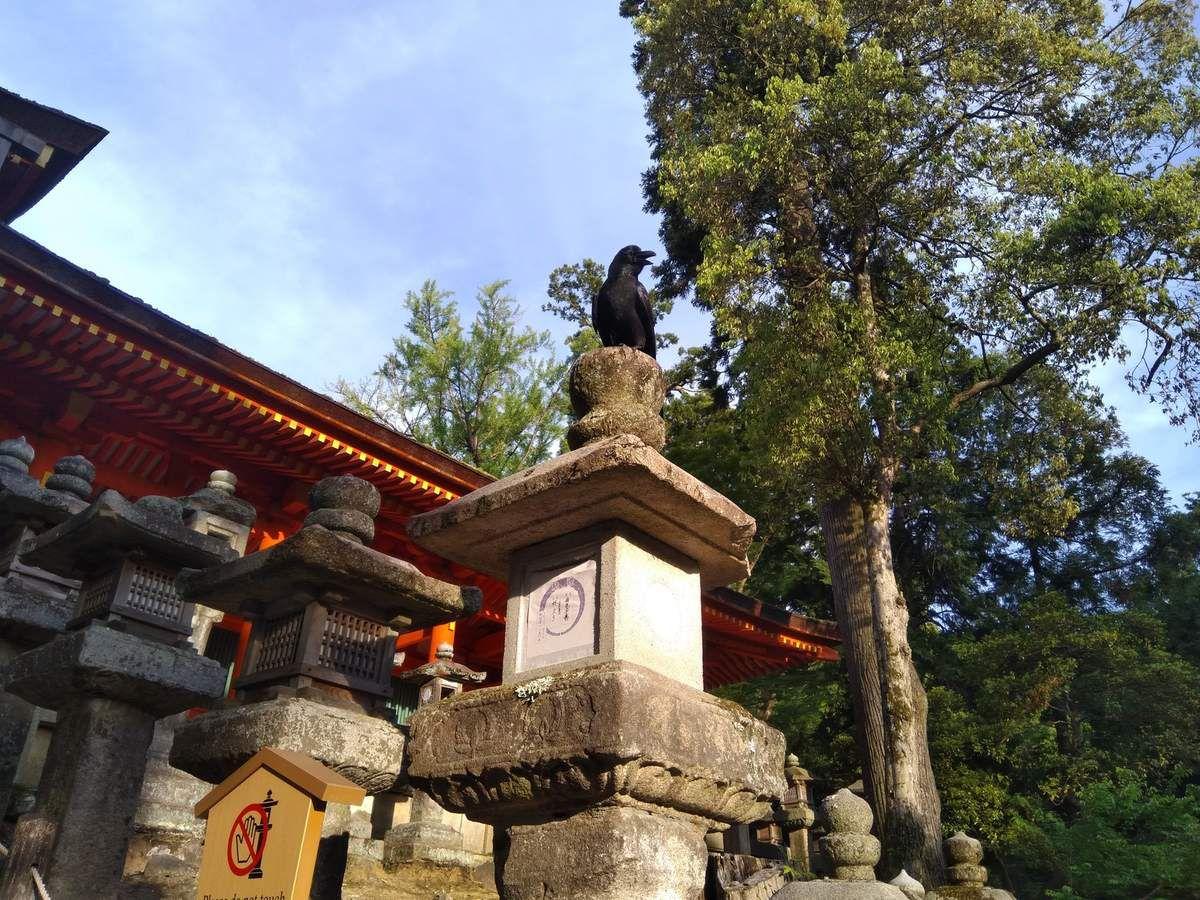 Ballade Près de la forêt primaire de Wakakusayama à Nara.