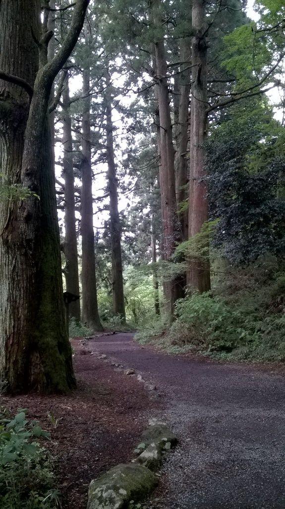 L'allée des Cèdres à Hakone