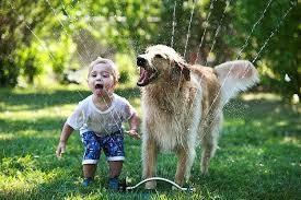 Un chien avec une laisse + 1 longe de 3 à 5 m (= pour une liberté sécurisée!) + des maîtres heureux... =chien plein  de bonheur!