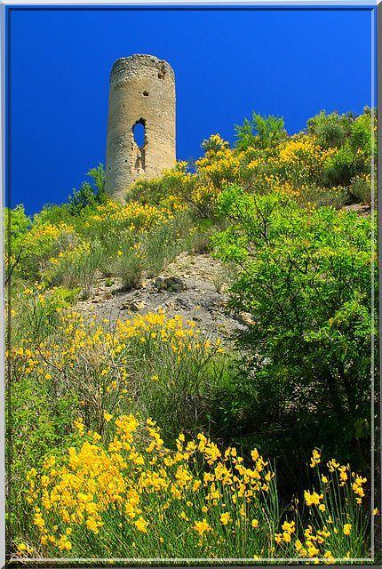 La végétation se fait belle pour rendre hommage à cette tour de l'histoire