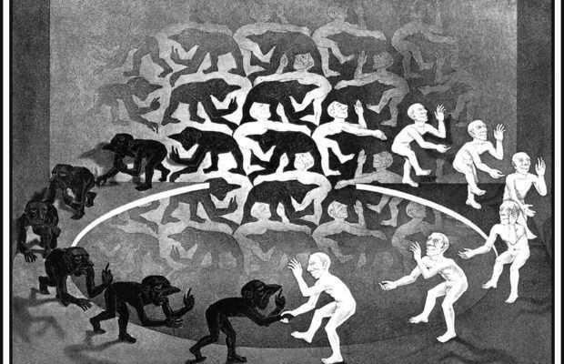 ADN : que change une différence de 1 ou 2 % d'avec les grands singes ?