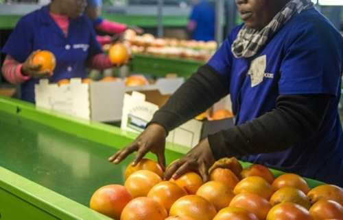 L'Afrique du Sud veut accélérer les expropriations sans dédommagement des fermiers blancs