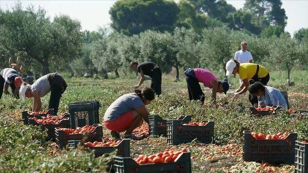 L'agromafia en Italie : le trésor de la came rouge