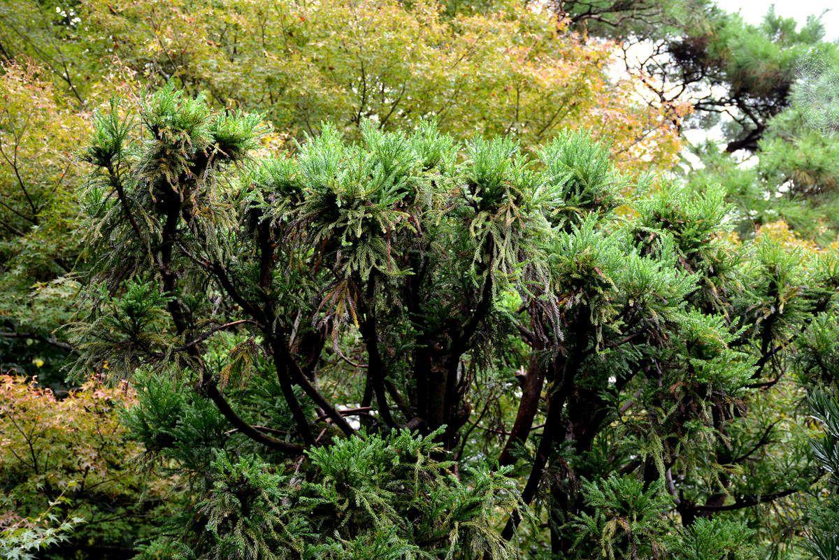 Kyoto - Jardins - Photos: Lankaart (c)