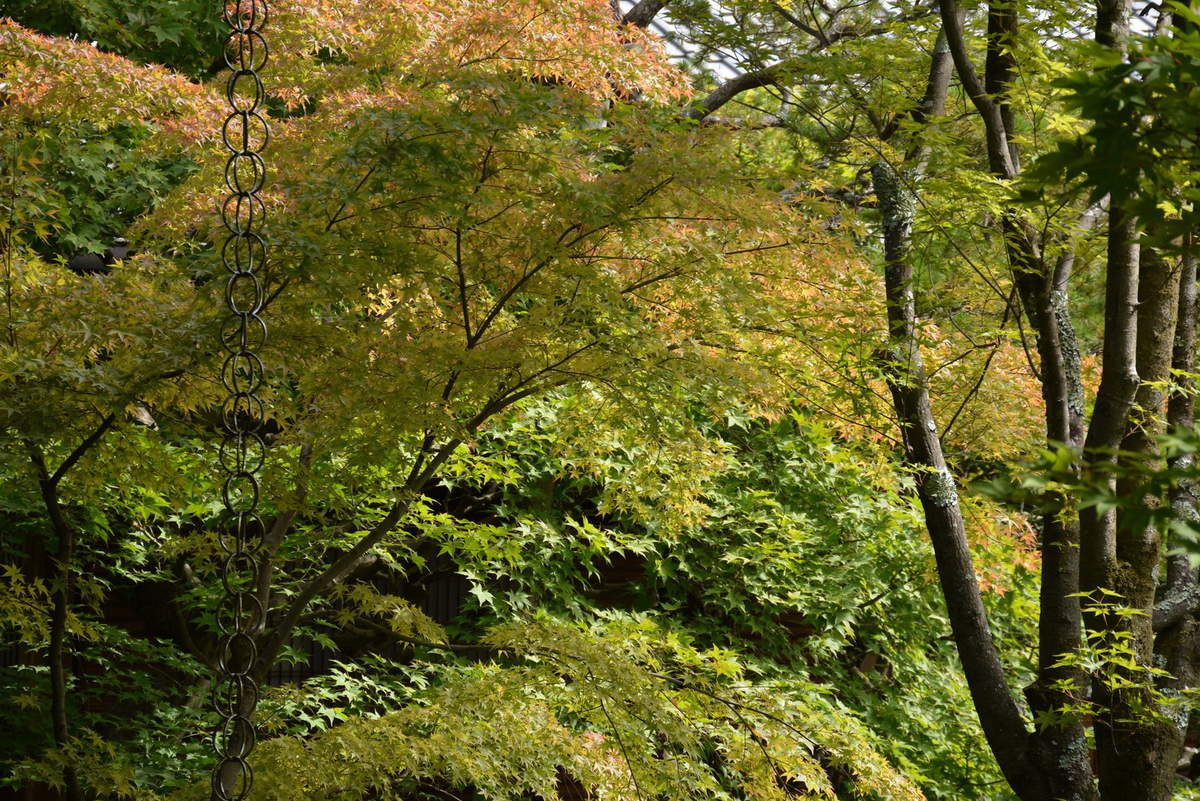 Kyoto -  Eikan-dō Zenrin-ji - Photos: Lankaart (c)