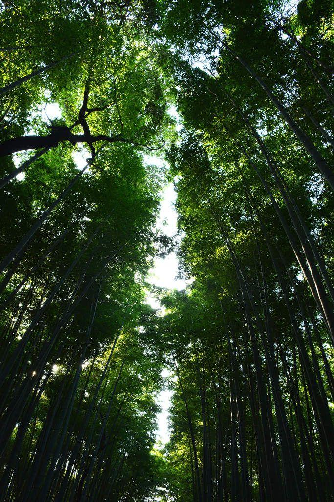Kyoto - La bambouseraie d'Arashiyama - Photos: Lankaart (c)