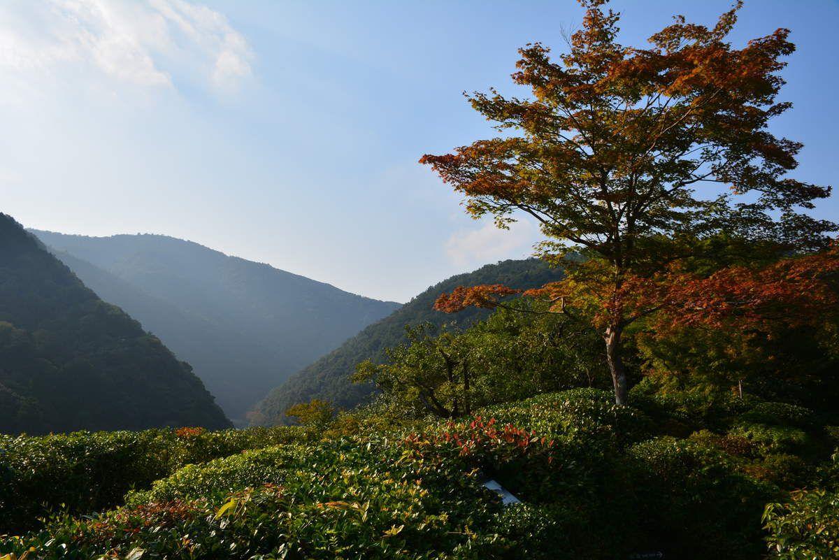 Kyoto - Villa Okochï Sansö - photos: Lankaart (c)