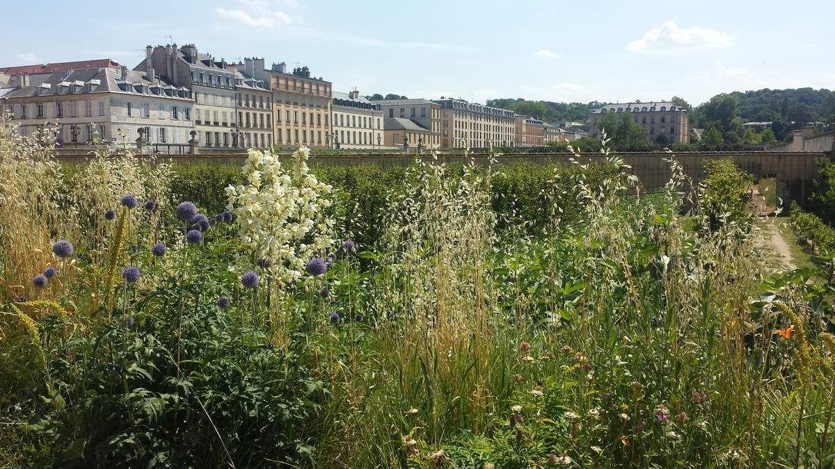 Versailles - Le potager du Roi - Photos: Lankaart (c)