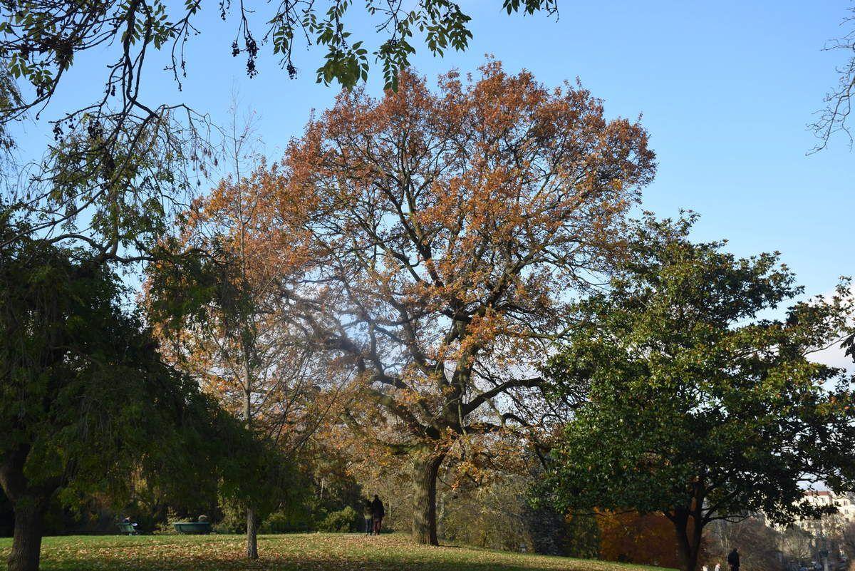 Paris - Parc Montsouris - Photos: Lankaart (c)