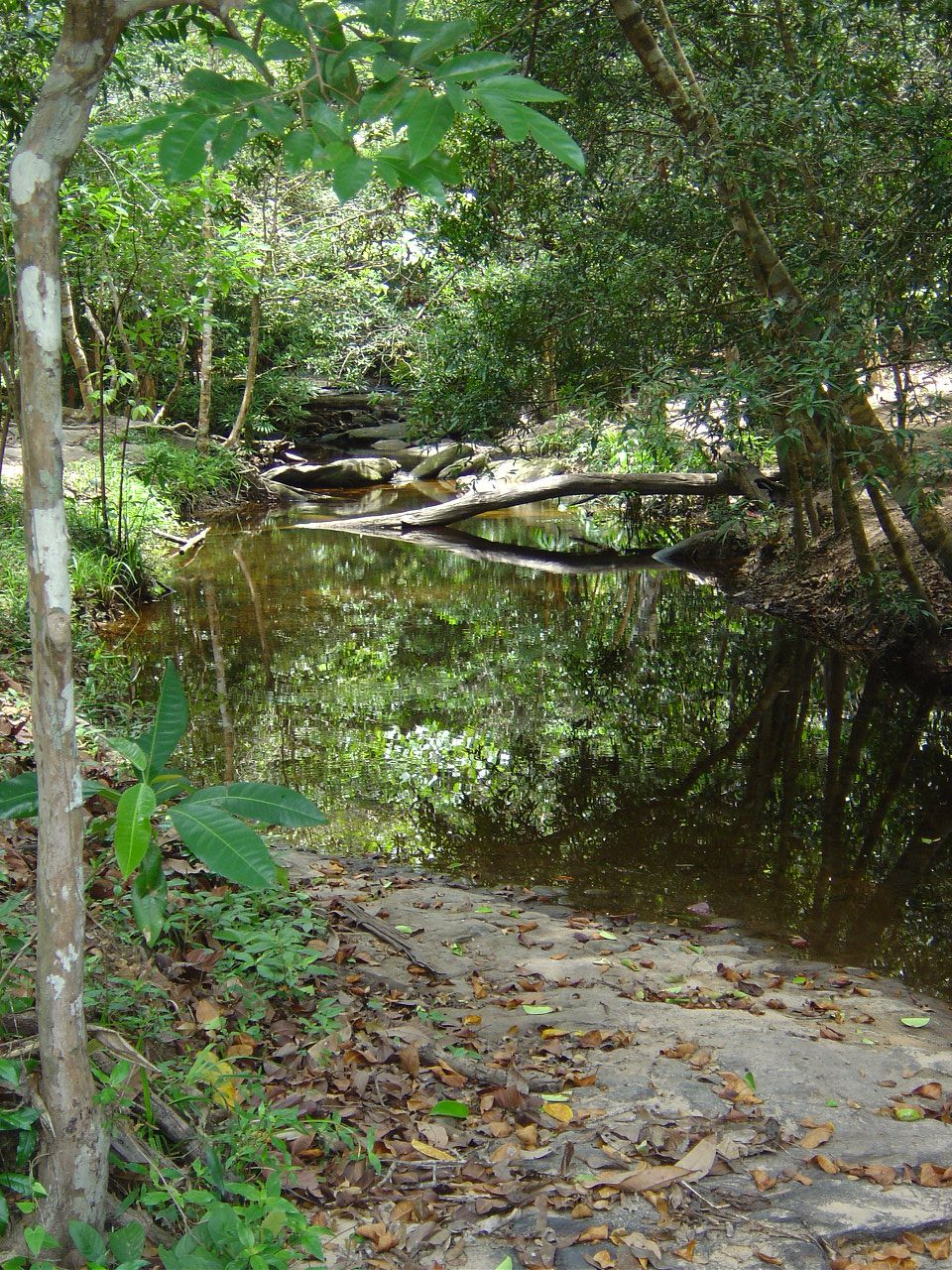 Angkor - Kobal Spien la rivière au mille Lingas - Photos: Lankaart (c)