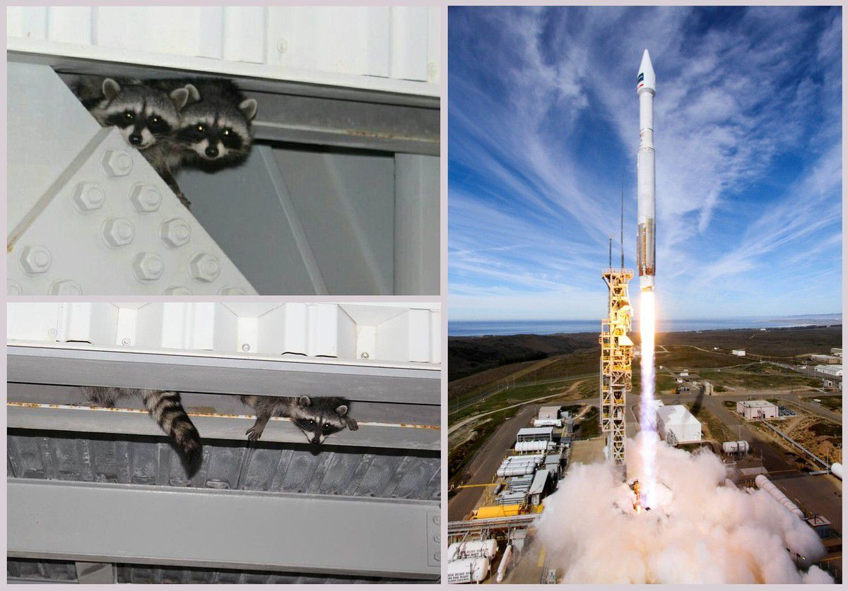 Lancement - satellite WorldView-4 - Atlas 5 - Ratons laveurs - Racoons - ULA - VAFB - DigitalGlobe