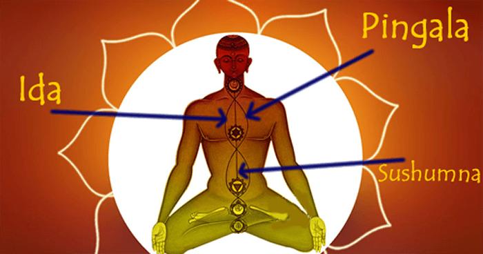 Les trois nadis les plus importants sont ceux qui dirigent le long de la colonne vertébrale: ida, pingala et sushunma.