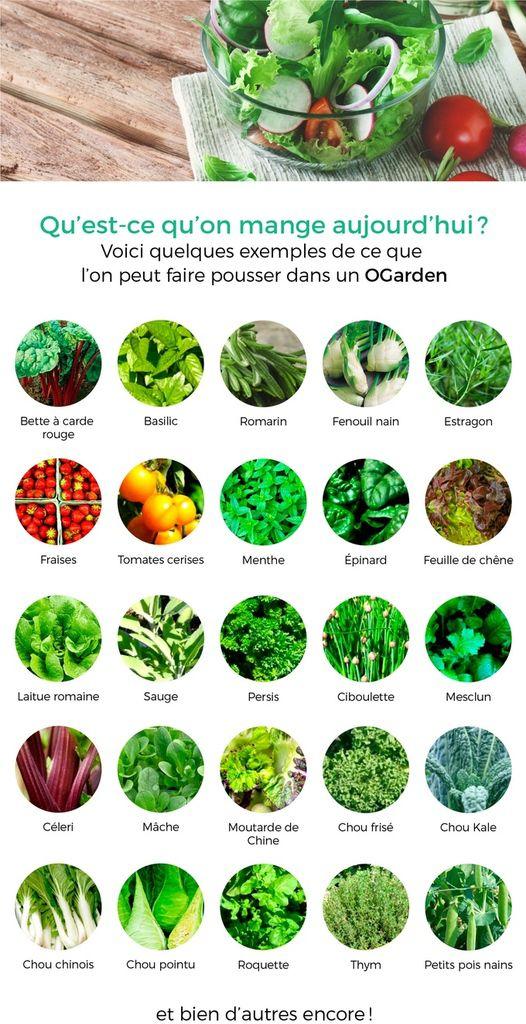Cultiver des légumes frais dans notre salon ou notre salle à manger est désormais possible grâce à OGarden