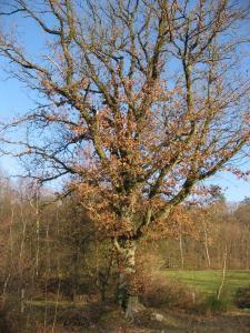 Un arbre avec de belles racines à Wéris (Durbuy + Belgique) ©René Dumonceau 2009