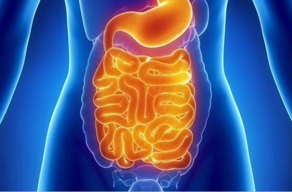 Comment nettoyer nos intestins quand on ne sait pas se passer de gluten