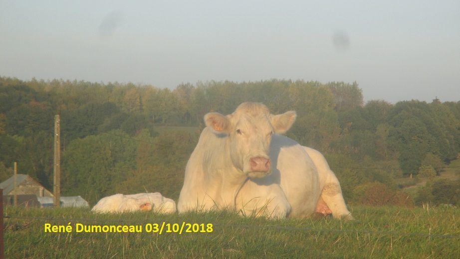 S'il n'y avait que des végétariens et des végans, les agriculteurs de nos villages feraient faillite... Ou alors ils seraient obligés de se recycler...
