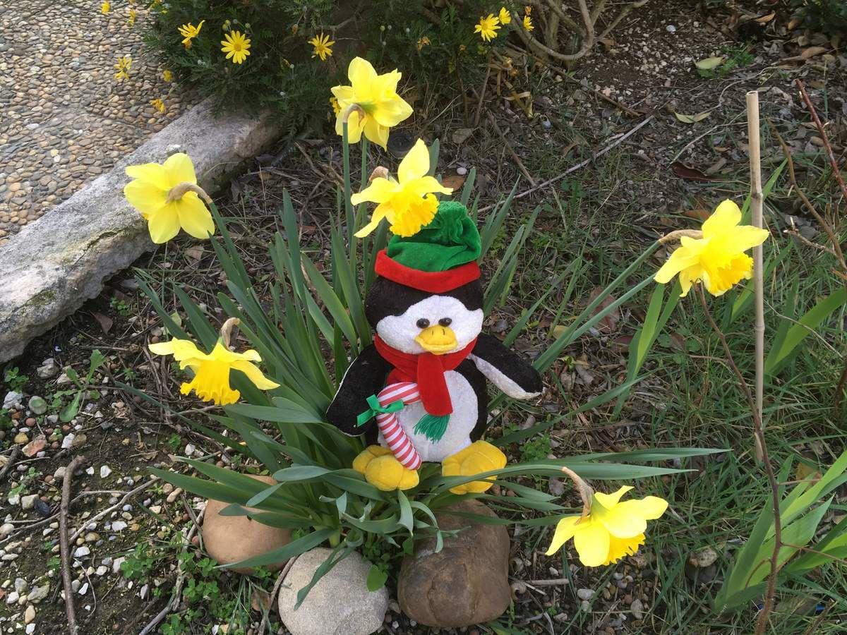 Allez hop, c'est le printemps sur la Banquise !!!