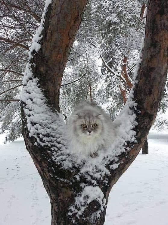 Bonne nuit polaire !