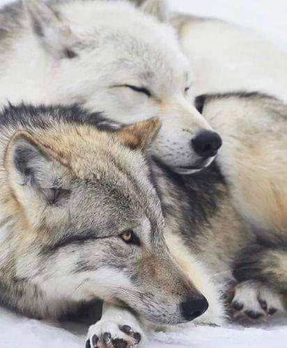Bonne nuit polaire à  tous!
