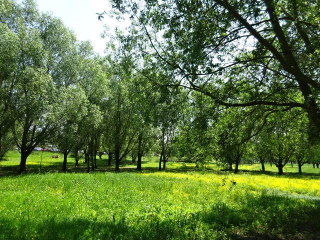 Angers Parc Balzac, les couleurs du printemps, Cl. Elisabeth Poulain