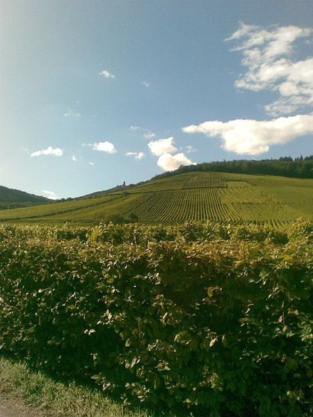 Alsace, vignes, paysage, Cl. Bserin.2010.09.18, wikipedia