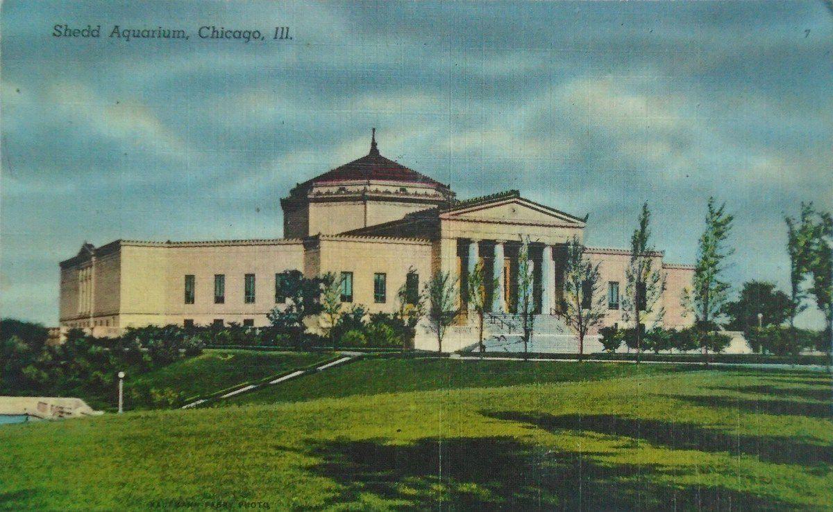 Trois cartes postales nord-américaines en couleurs des années 50