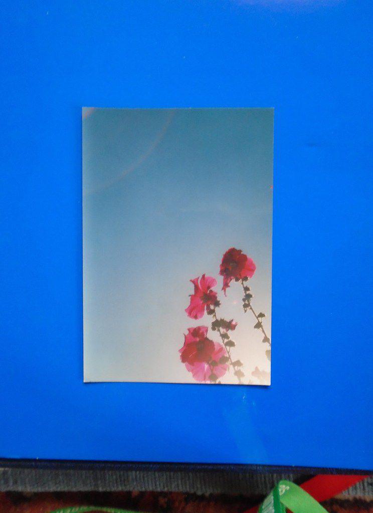 Roses trémières sur fond de ciel bleu & bordures latérales bleu moyen tonique, Cliché Elisabeth Poulain