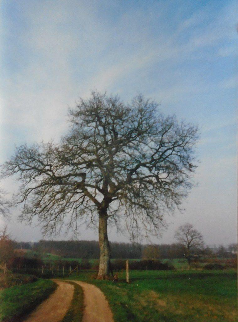 L'hiver, l'arbre dans toute sa beauté, Cliché 1999-2019 Elisabeth Poulain