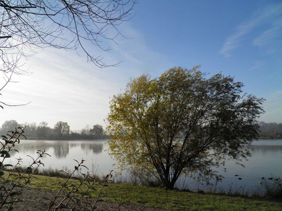 Balade nature... du 02.01.2017 Lac de Cadarsac.33750 ( cliché PB Olympus SP-800UZ)