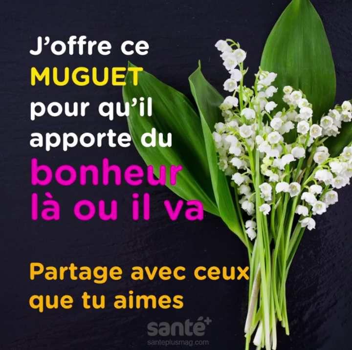 Le Muguet à l'honneur .............
