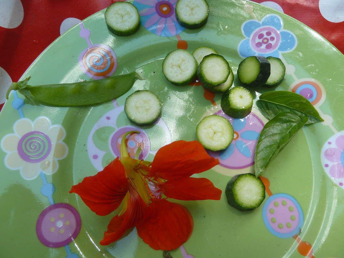 salade, pois mange-tout, courgette(mini!), fleurs de capucine, basilic, ciboulette!